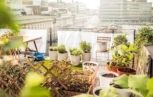 Tuinplanten: voor je tuin of balkon