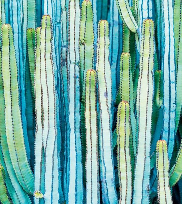 Druck einer hohen Kaktee in Grün und Blau