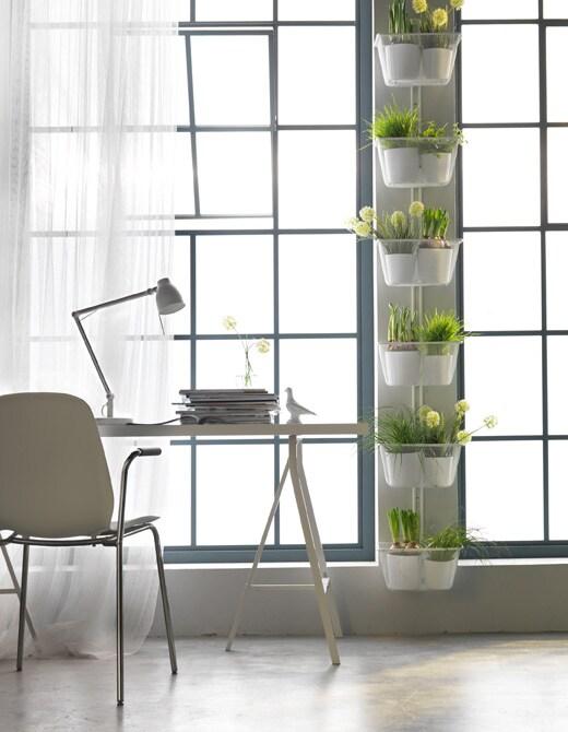 Du träumst von einem Garten, hast aber nur eine kleine Wohnung? Dann erweitere deine Fensterbank doch einfach mit ALGOT Wandschiene mit Kästen in Weiß zwischen zwei Fenstern.