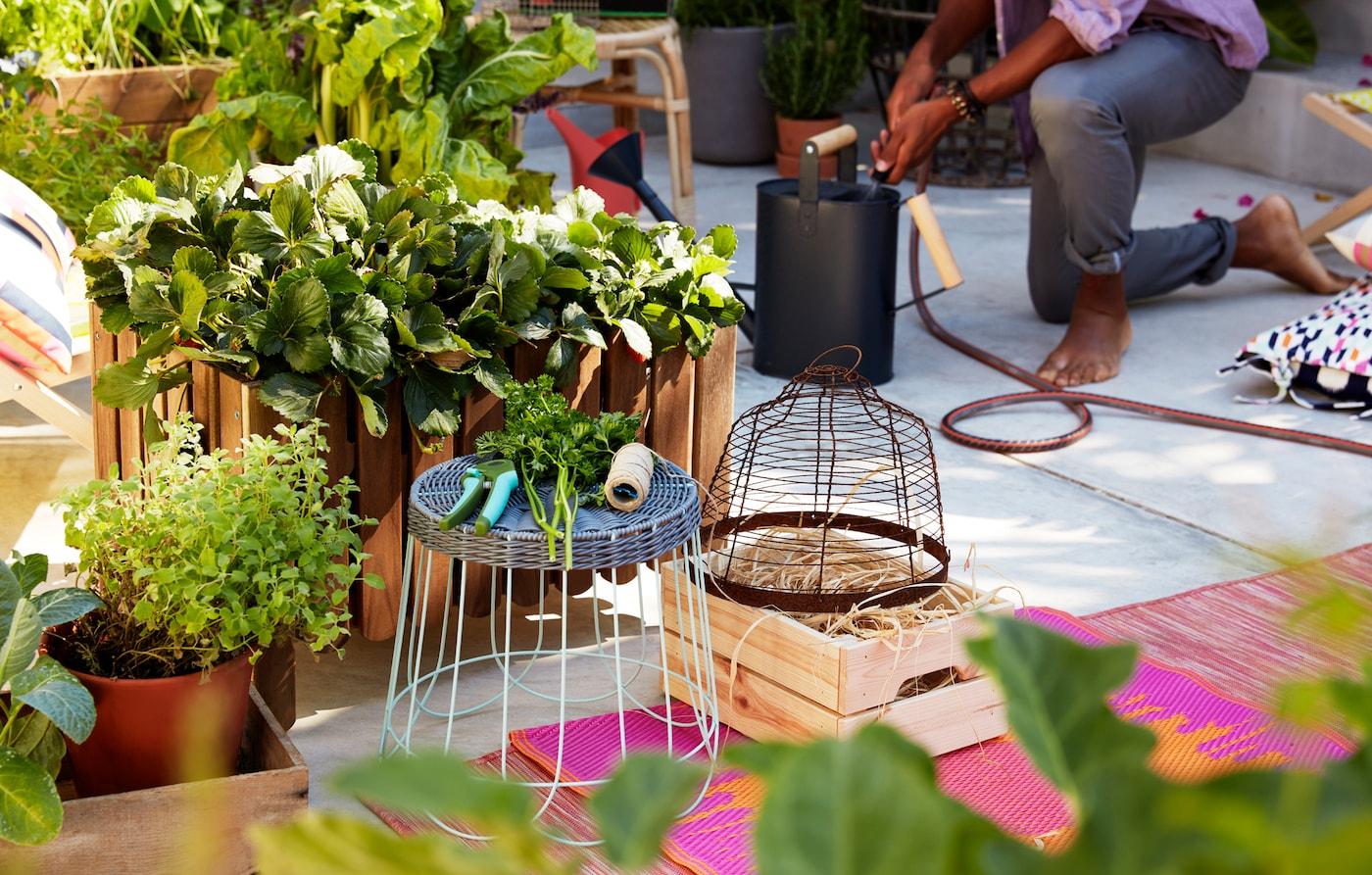 Duża drewniana skrzynia z roślinami stojąca na betonie w otoczeniu dywanów, stołka i narzędzi ogrodowych.