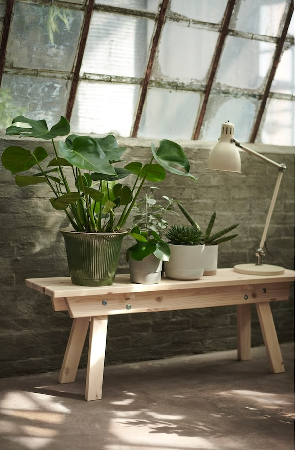 Dve drvene stolice jedna na drugoj s velikom saksijskom biljkom pored ogledala.