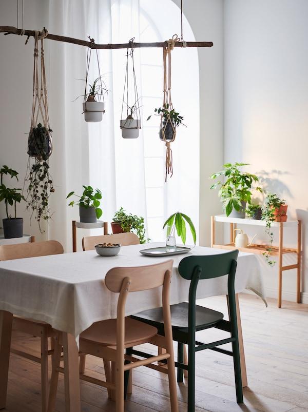 ديكور داخلي لشقة مع طاولةوكراسي، وطاولةجانبيةبجوارالحائط. نباتاتخضراء على كل الأسطح وبعضها معلق فوق الطاولة.