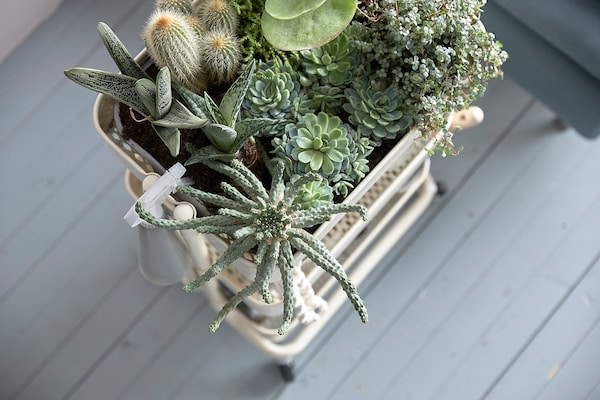 A storage trolley containing plants.