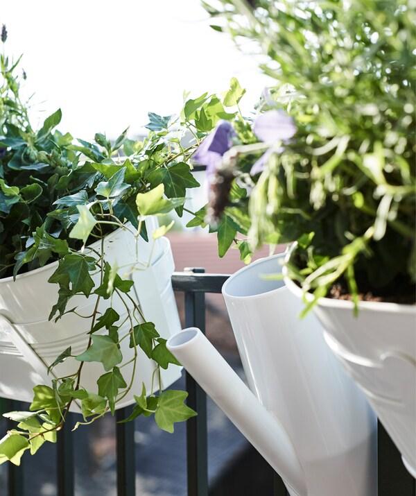 Efeu vokser i hvide urtepotteskjulere, der hænger på altanens gelænder, og en hvid vandkande.