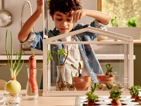 Egy fiú növénypalántákat gondoz egy SOCKER üvegházban. Különböző zöldségek állnak vízben vagy földben elültetésre várva.