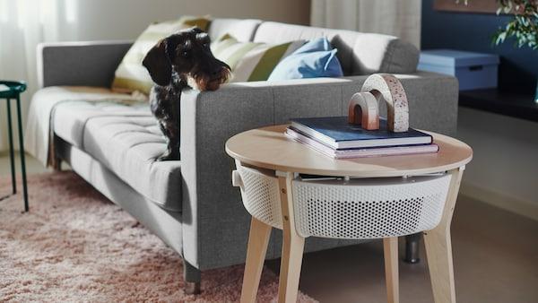 Egy kutya pihenteti a fejét egy LANDSKRONA kanapé karfáján és egy STARKVIND asztalt néz, amin egy légtisztító van.
