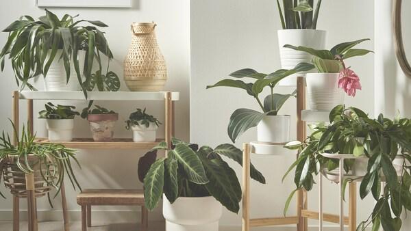 Egy zöld szobasarok, tele növényekkel, melyek különböző magasan vannak elhelyezve.