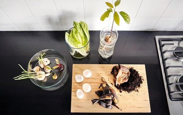 Eierschalen und Kaffeesatz auf einem Schneidebrett aus Holz neben austreibenden Knoblauch- und Zwiebelpflanzen in Glaszylindern. Ein welkender Salatkopf sitzt in einer Vase mit etwas Wasser und ein Avocadokern treibt in einem Kunststoffbehälter aus.