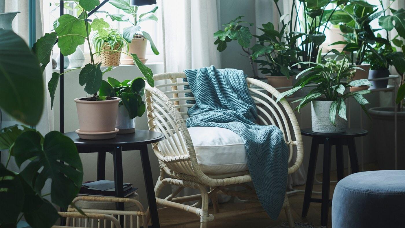 Ein Bereich bei einem Fenster wurde mit Pflanzen in CHIAFRÖN Übertöpfen und MUSKÖTBLOMMA Blumentöpfen mit Untersetzer und einem INGABRITTA Plaid über einem Rattansessel in eine Oase der Ruhe verwandelt.