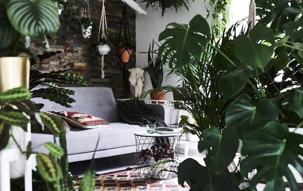 Ein Blick durch viele Pflanzen in ein Wohnzimmer mit einem grauen Sofa und einem gemusterten Teppich