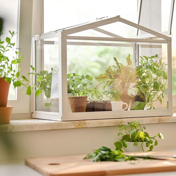 Ein Gewächshaus mit Pflanzen steht auf der Fensterbank und ein Schneidebrett aus Holz liegt davor auf der Arbeitsplatte.