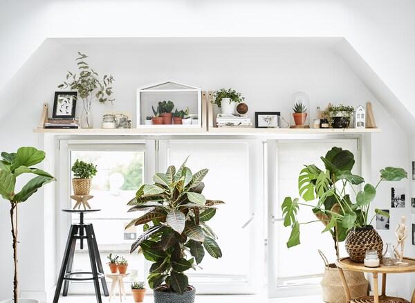 Ein großes Fenster mit Regalen und Pflanzen, u. a. mit DALFRED Barhocker schwarz