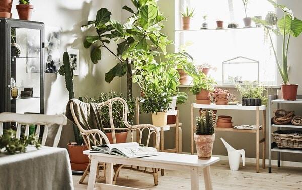 Ein helles Zimmer, u. a. eingerichtet mit einer Pflanzstation, Stühlen und jeder Menge Pflanzen.