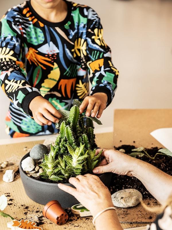 Ein Kind in einem bunten Sweatshirt setzt eine Zimmerpflanze in einen Übertopf.