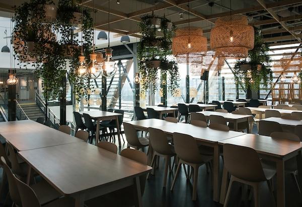 Ein Raum mit langen Tischreihen und vielen ODGER Stühlen in unterschiedlichen Farben, hinzu kommen SINNERLIG Hängeleuchten