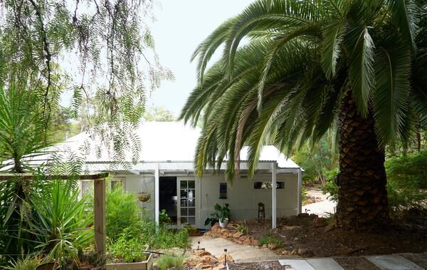 Ein weisser Bungalow umgeben von Bäumen und einer massiven Palme