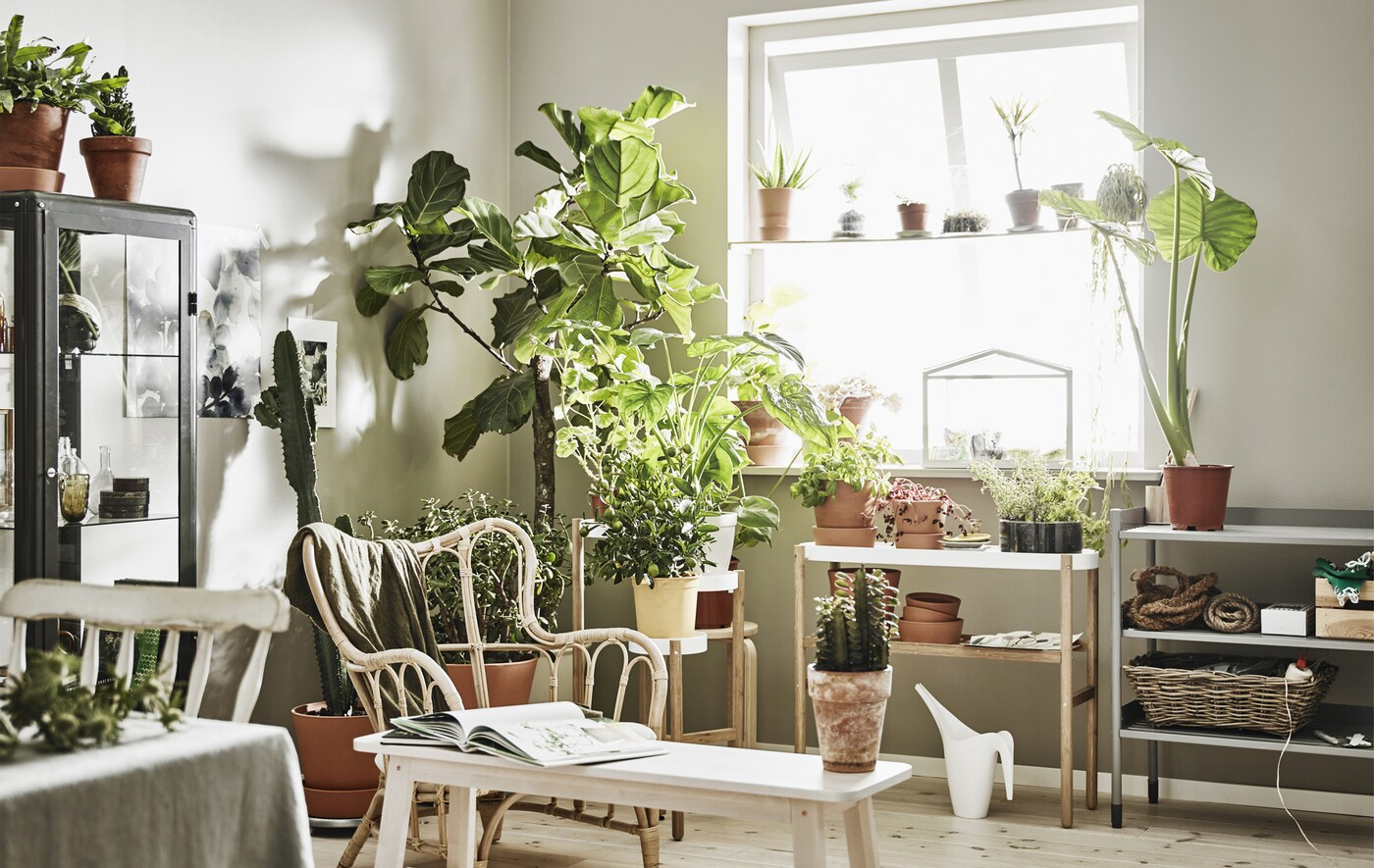 Eine Ecke in einem weißen Wohnzimmer, wo viele Zimmerpflanzen stehen.
