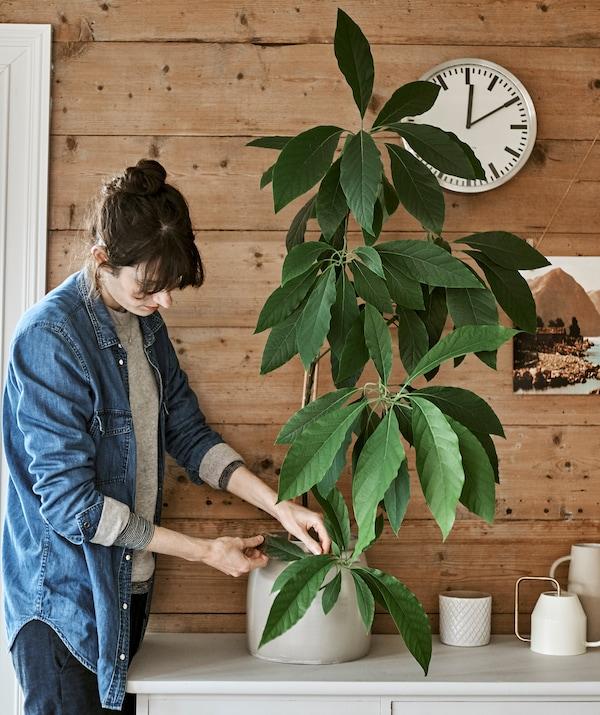 Eine Frau kümmert sich um eine Zimmerpflanze, u. a. mit einer VATTENKRASSE Gießkanne