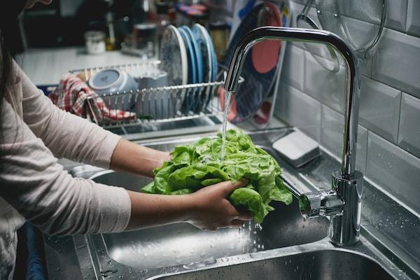 Eine Person wäscht gerade einen Kopfsalat in einem Waschbecken unter fließendem Wasser