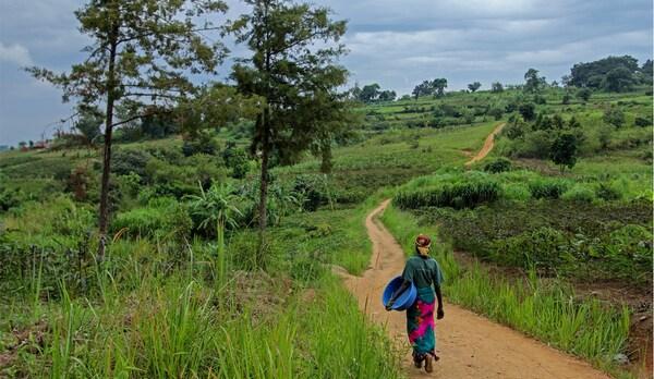 Emakume bat saski batekin, Ugandako paisaia berde baten erdian bide luze batetik ibiliz.