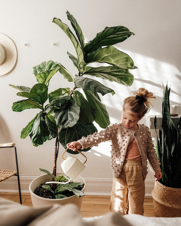 Emilie's daughter Brook watering a large green plant with an ivory and gold VATTENKRASSE watering can.