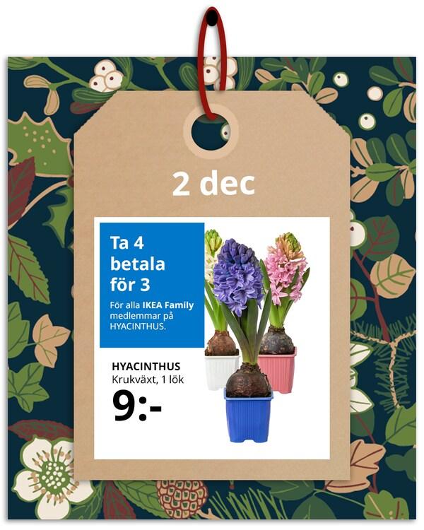 En brun hängetikett med rött band hänger framför en grön och blommönstrad bakgrund med IKEA family erbjudandet den 2 december, som är fyra för tre på hyacinter.