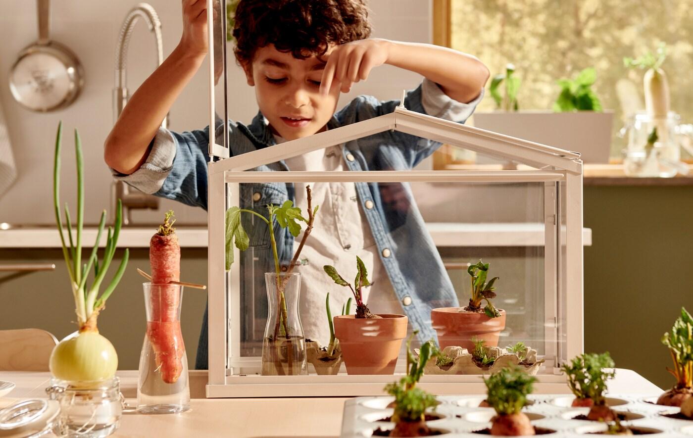En dreng kigger ned på nogle små planter i et SOCKER drivhus. Ved siden af på bordet står grøntsager i vand eller jord.