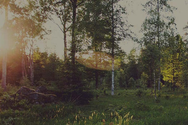 En grön Smålandsskog