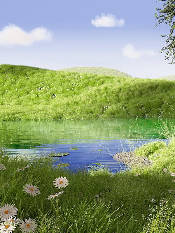 En grøn sommereng med vilde markblomster og en lille dam i baggrunden