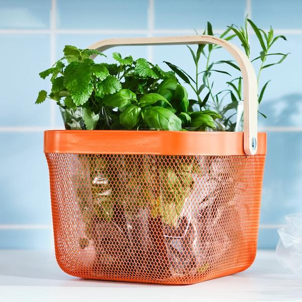 En køkkenbordplade med grønne urter i en lys orange RISATORP trådnetkurv med et greb lavet af birkefiner.