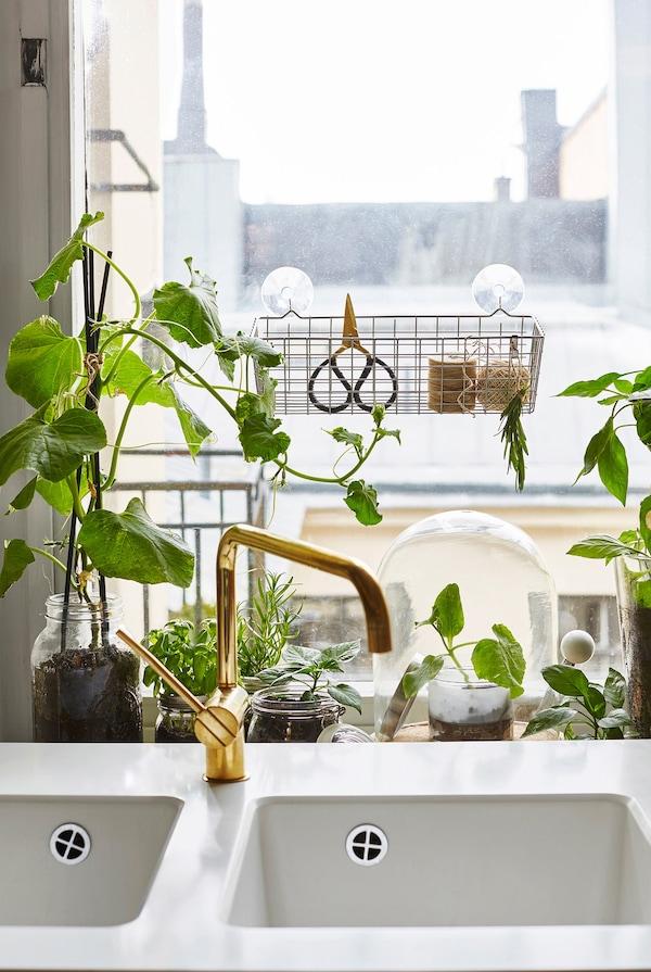 En la ventana, crecen hierbas y lechuga justo detrás del fregadero.