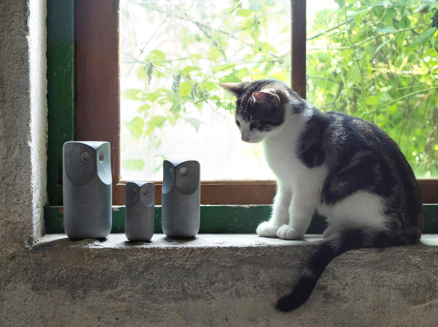 En lille hvid og grå kat sidder i en vindueskarm og kigger på 3 grå TONAD dekorative ugler af beton.