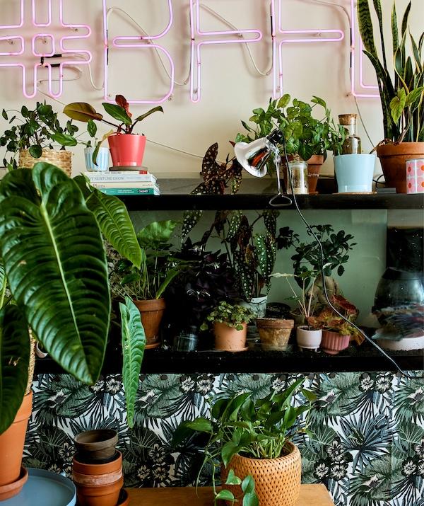 Enseigne lumineuse au-dessus d'étagères murales sur lesquelles sont disposées des plantes vertes.