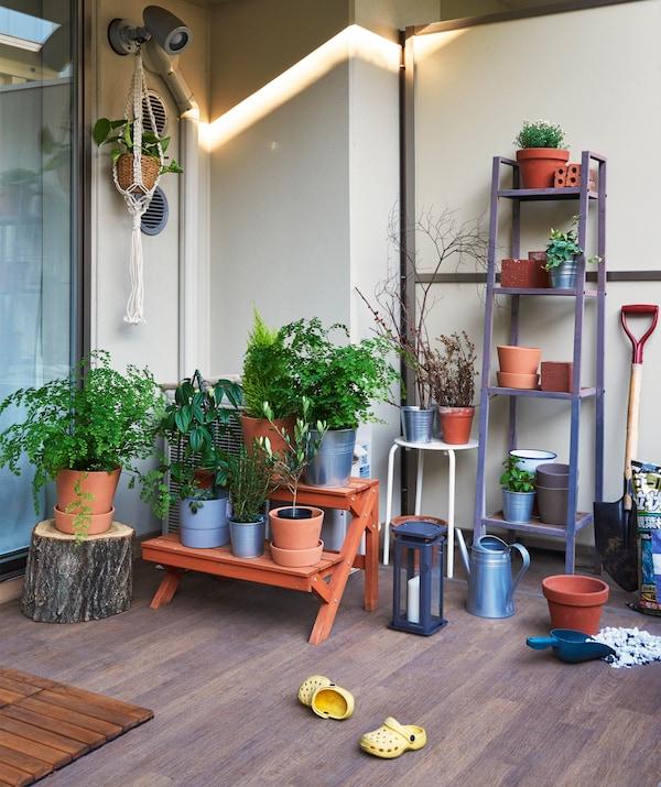 Espace extérieur, revêtement de sol en bois, et plantes en pot sur un banc et des étagères.