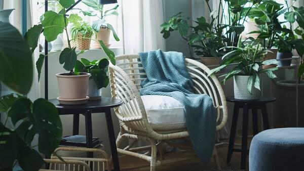 Et område ved et vindu er omgjort til en oase med planter i CHIAFRÖN og MUKÖTBLOMMA blomsterpotter, INGABRITTA pledd og en rottingstol.