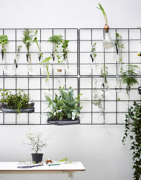 A wire trellis mounted on the wall with tubes of plant and water.