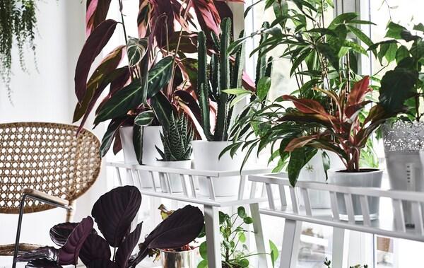 cd5f5398 Hjemmebesøk: still ut plantene dine som en ekspert
