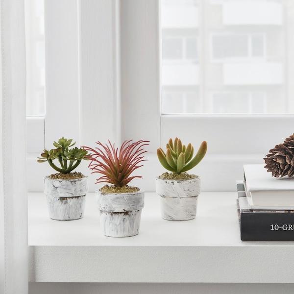 fejka kunstplant met pot succulent, drie plantjes naast elkaar