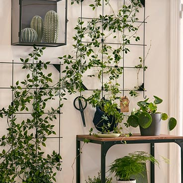 fejka-plante-tombante-accrochée-tableau-affichage