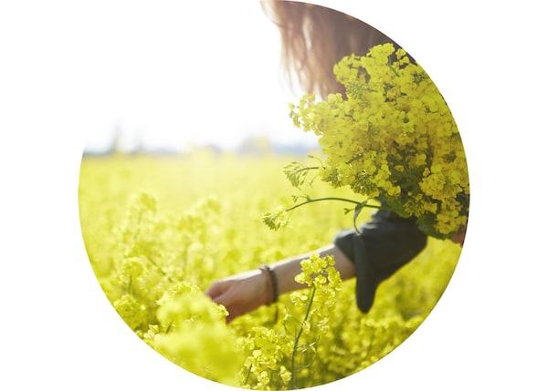 Femme en train de cueillir des fleurs dans un champ ensoleillé.