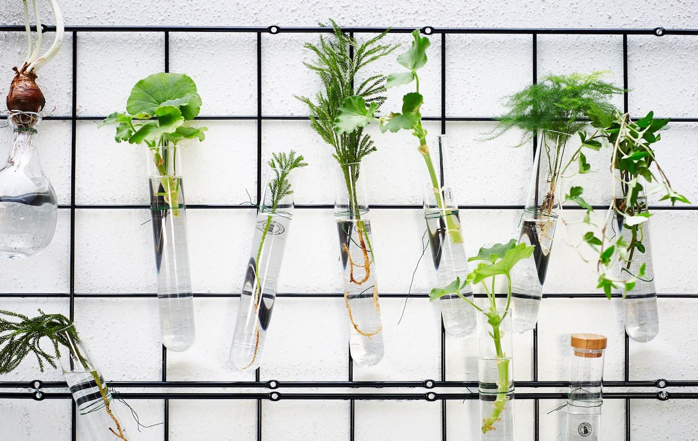 Flere espalier af trådnet hænger på en væg og udstiller planter i små glas