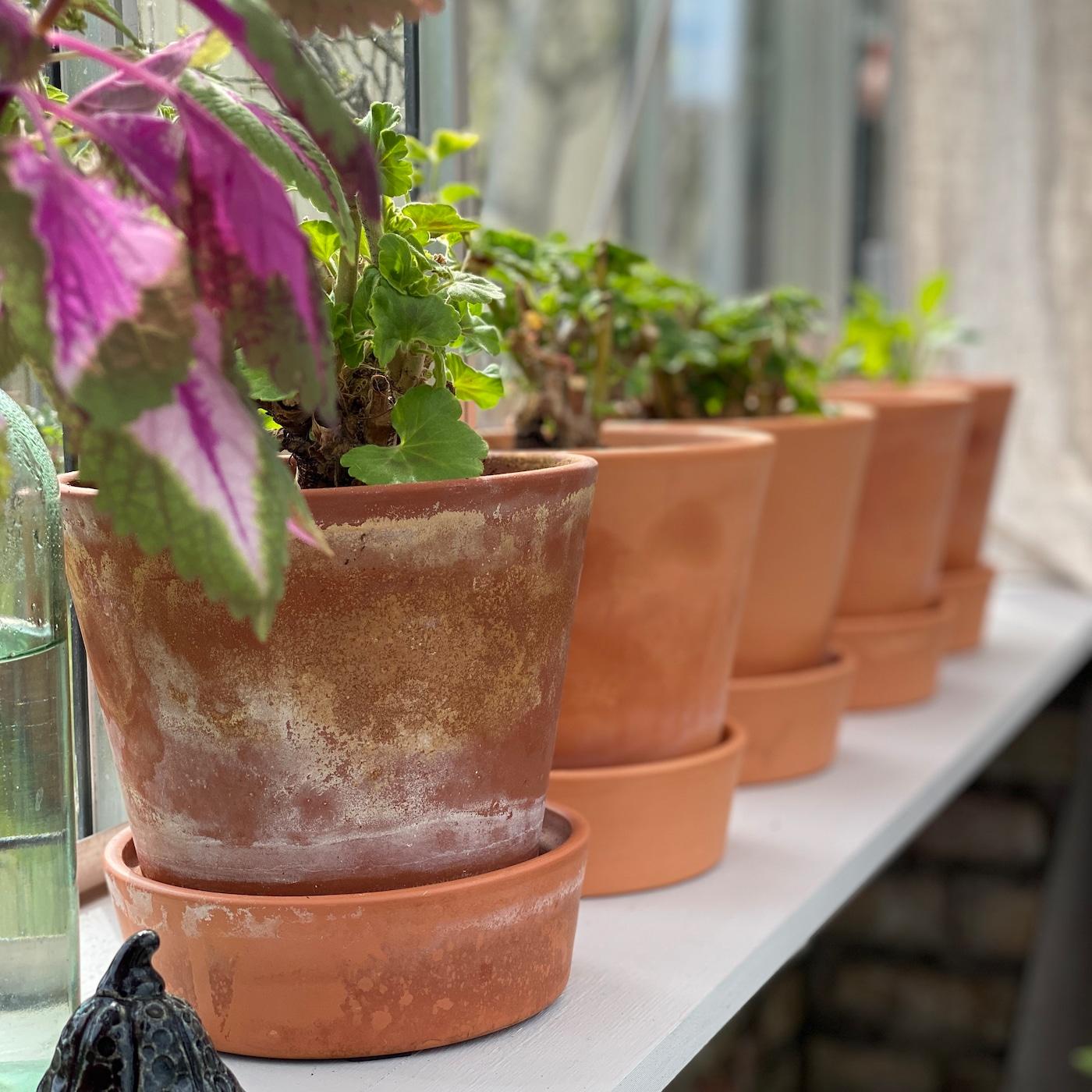 Inred ditt växthus för odling och avkoppling IKEA
