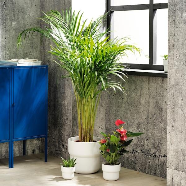 forenlig sierpot wit twee kleine en een grote met planten in