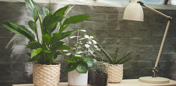 Four different types of plants on a table with a lamp in a bedroom