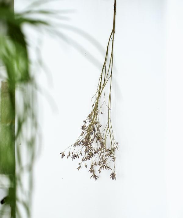 فرع زهرة مجفف معلق على حائط أبيض.