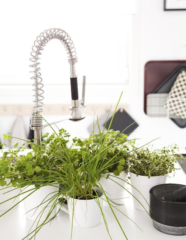 Fregadero de cocina blanco con una colección de hierbas en maceteros.