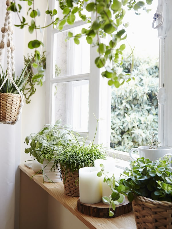 Ganz neue Aussichten für dein Zimmer, u. a. mit FRIDFULL Übertopf aus Wasserhyazinthe