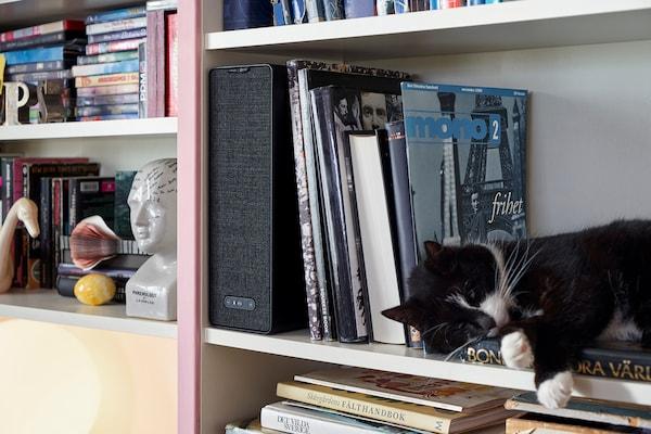 本がたくさん入った本棚の中に置かれている、SYMFONISK/シンフォニスク ブックシェルフ型WiFiスピーカー。棚のひとつには、丸くなって昼寝をする猫。