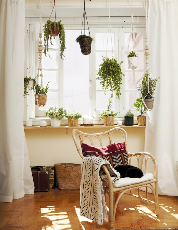 Genieße die Freuden von Zimmerpflanzen, u. a. mit DRUVFLÄDER Ampel in Wasserhyazinthe/Grau