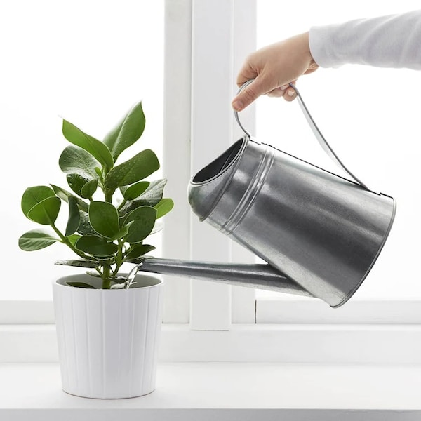 Get started with indoor plants